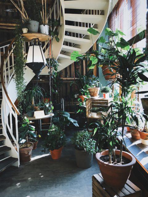 Interiérová záhrada
